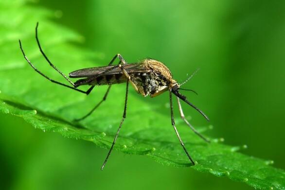 Ο Δήμος Δυτικής Αχαΐας πραγματοποιεί πρόγραμμα καταπολέμησης κουνουπιών
