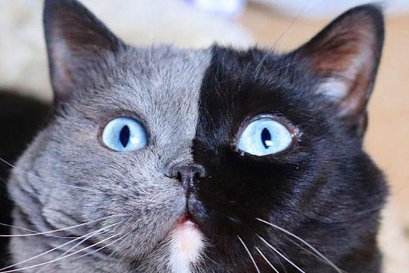 Νάρνια - Ο γάτος σταρ του Instagram με το δίχρωμο πρόσωπο