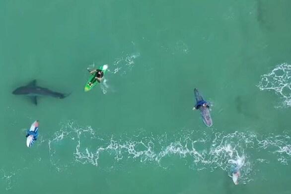 """Λευκός καρχαρίας """"παραμονεύει"""" δίπλα από σέρφερ (video)"""