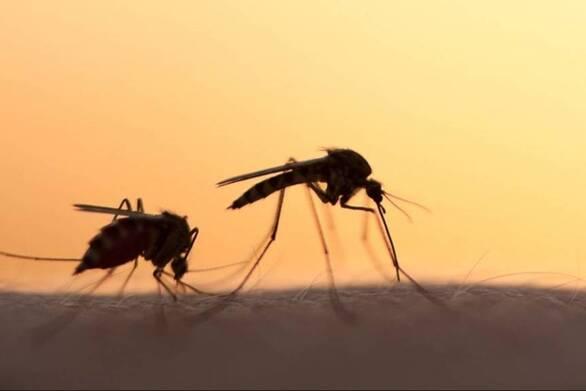 Κουνούπια: Γιατί τσιμπούν εσάς και όχι τον διπλανό σας