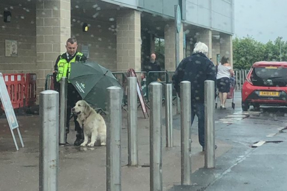 Άνδρας security κράτησε ομπρέλα σε σκύλο για να μη βραχεί