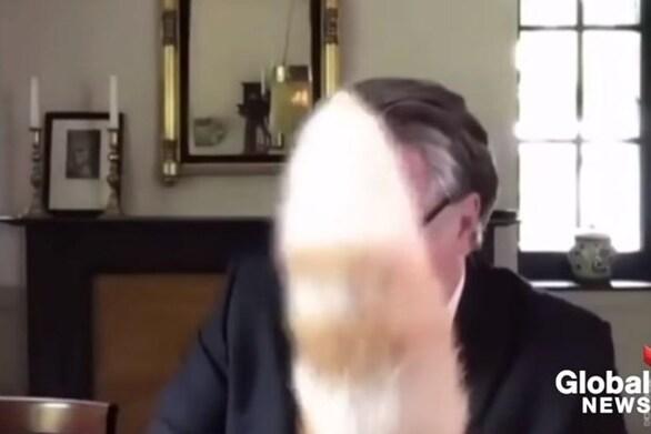 Γάτα διακόπτει βουλευτή κατά τη διάρκεια τηλεδιάσκεψης (video)