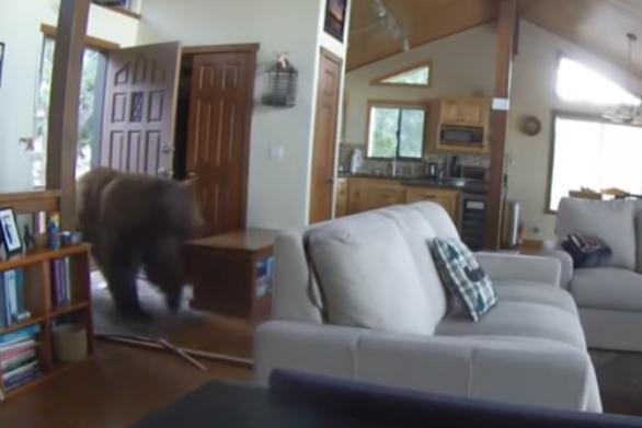 Τεράστια αρκούδα μπουκάρει σε σπίτι (video)