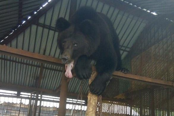 Ρωσία: Αρκούδες έσυραν στο κλουβί τους 11χρονο και τον κατασπάραξαν μπροστά σε δύο φίλες του