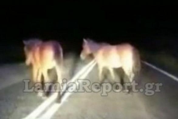 Φθιώτιδα: Οδηγοί «πέφτουν» πάνω σε άλογα (video)