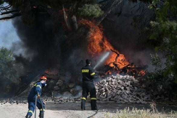 Λακωνία: Καίγεται δάσος στο Οίτυλο