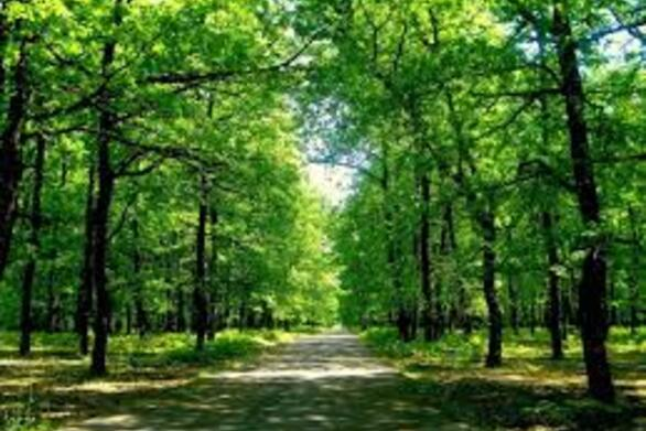 Το μυθικό δάσος της Φολόης που σε βάζει στη μαγεία του παραμυθιού (φωτο)