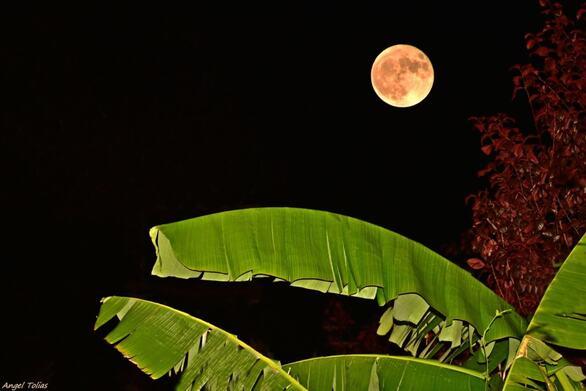 Η σελήνη στην Πάτρα σε φόντο καθαρά τροπικό!