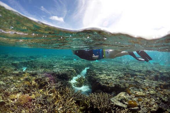 Ο Μεγάλος Κοραλλιογενής Ύφαλος εκπέμπει SOS! (video)
