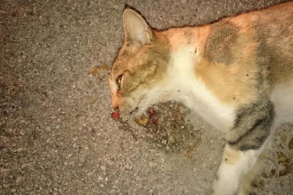 Φρίκη στην Πλαζ της Πάτρας: Άγνωστος ή άγνωστοι έσφαξαν γάτες
