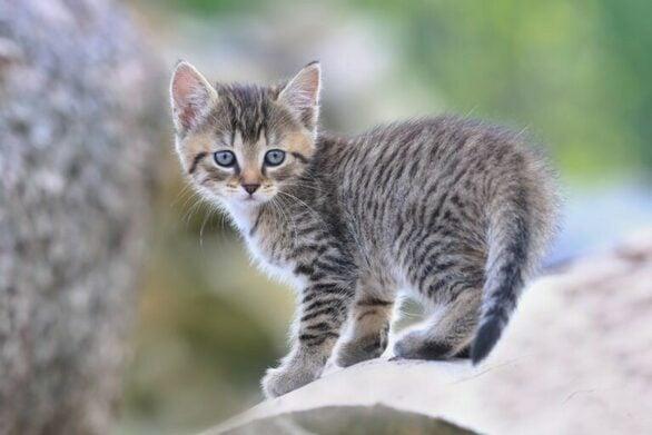 Μεσολόγγι: Πυροβόλησε μια γάτα επειδή μπήκε στην αυλή του!