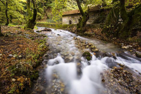 Ένα υπέροχο δάσος από πλατάνια στολίζει την ορεινή Αχαΐα (φωτο)