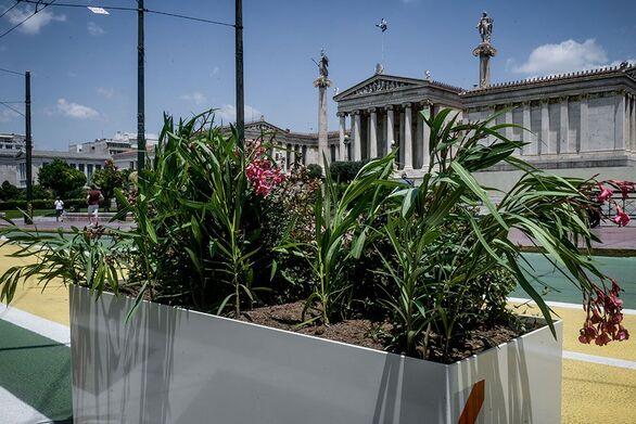 Μεγάλος Περίπατος: Φύτεψαν κάνναβη στις ζαρντινιέρες (pics+video)