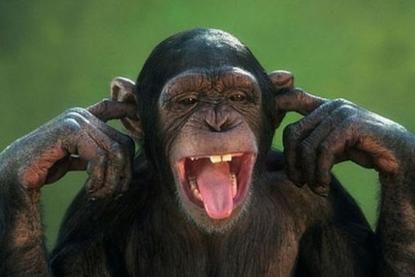 Πώς οι χιμπατζήδες μιμούνται τους ανθρώπους σε θέματα φιλίας
