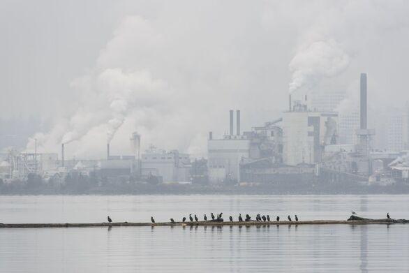 ΗΠΑ: «Δισεκατομμύρια πτηνά» σώθηκαν χάρη στη μείωση της ατμοσφαιρικής ρύπανσης