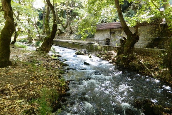 Το δάσος με τα πλατάνια - Ένας κρυφός, ιερός παράδεισος στην Αχαΐα (video)
