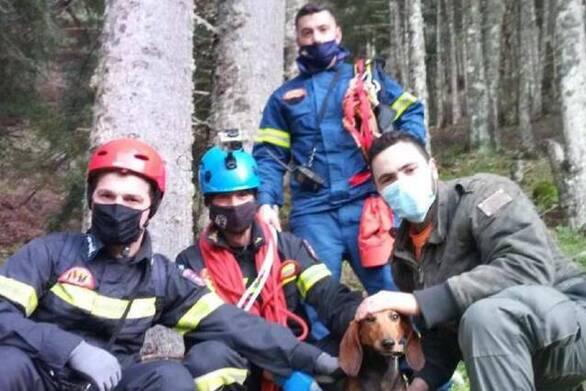 Καλάβρυτα: Πυροσβέστες έσωσαν κυνηγετικό σκυλί που είχε παγιδευτεί (φωτο)