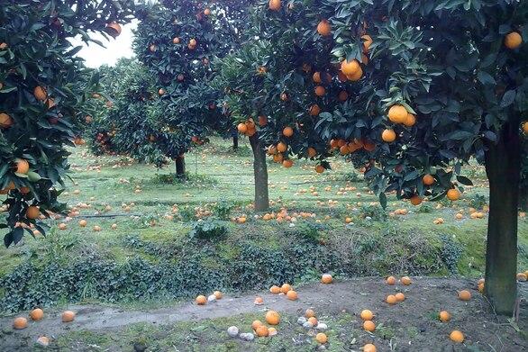 Αχαΐα: Το δεύτερο lockdown έφερε στο ναδίρ τα αγροτικά προϊόντα