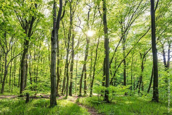 Διαβούλευση για τη νέα στρατηγική της ΕΕ για τα δάση