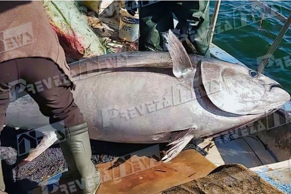Μεγάλη ψαριά στην Πρέβεζα