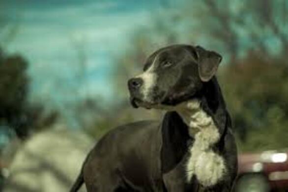 H JYSK σχετικά με το περιστατικό με αδέσποτη σκυλίτσα στο parking του καταστήματος της στο Αγρίνιο