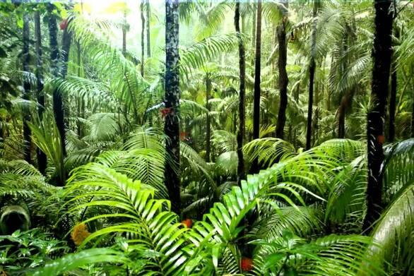 Τεράστια η καταστροφή των τροπικών δασών το 2020
