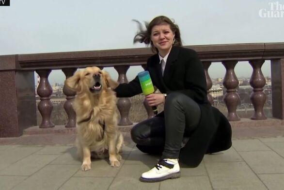 Ρωσία: Σκύλος έκλεψε το μικρόφωνο από ρεπόρτερ (video)