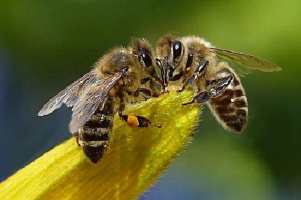 Άρτα: Υπέστη αλλεργικό σοκ και ανακοπή από τσίμπημα μέλισσας