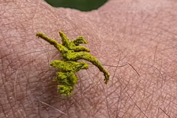 Ίσως η πιο περίεργη κάμπια που έχεις δει ποτέ (video)