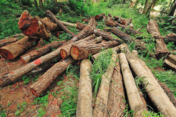 Απογοητευτική έκθεση του WWF για την αποψίλωση τροπικών δασών