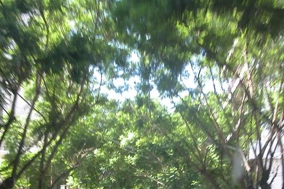 """Πάτρα: """"Γυμνή"""" απέμεινε η Κωνσταντινουπόλεως με τα κομμένα δέντρα (φωτό)"""