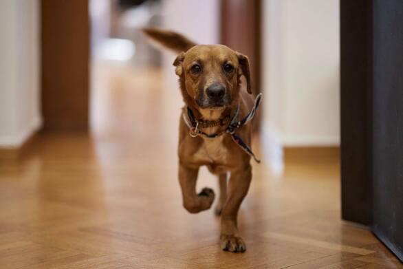 Το νέο σκυλόσπιτο του Πίνατ το φτιάχνει κρατούμενος στις φυλακές Αλικαρνασσού