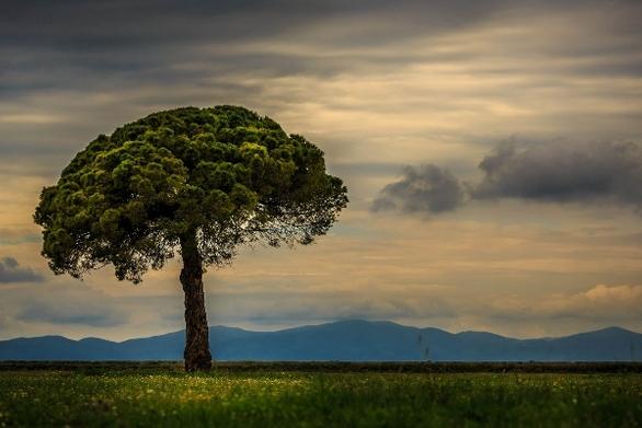 """Ηρακλής Φίλιος: """"Το δέντρο και ο Θωμάς"""""""
