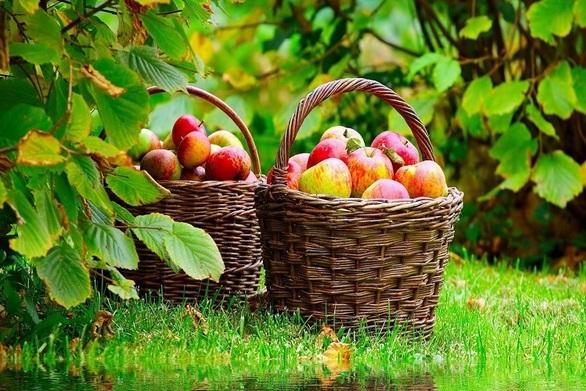 Μήλα από τον κήπο τους προτιμούν οι Ισπανοί