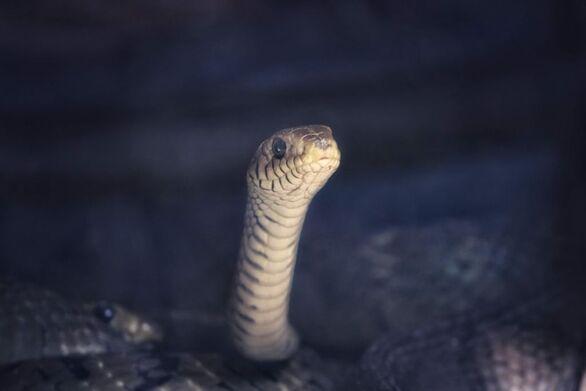 ΚΤΕΛ Κηφισού: Φίδι έφερε τον τρόμο σε ταξιδιώτες