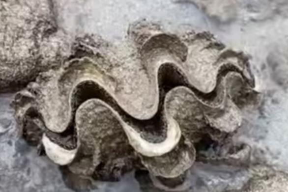 Όστρακο επιφύλασσε μια έκπληξη σε κάποιον περίεργο (video)