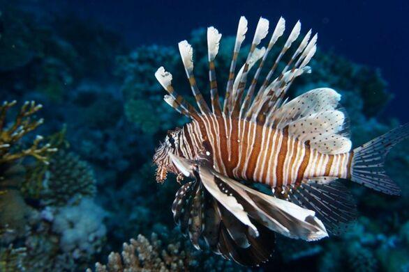 Κλιματική αλλαγή: Εκατοντάδες τροπικά είδη εισβάλλουν στη Μεσόγειο