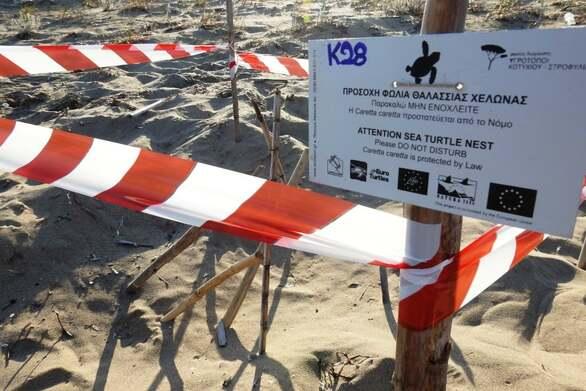 Πάνω από 40 φωλιές caretta - caretta στην περιοχή Κοτυχίου – Στροφυλιάς (φωτό)