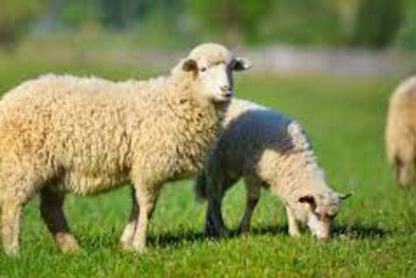 Δυτική Ελλάδα: Οδηγίες προς κτηνοτρόφους για την προστασία από τον καταρροϊκό πυρετό