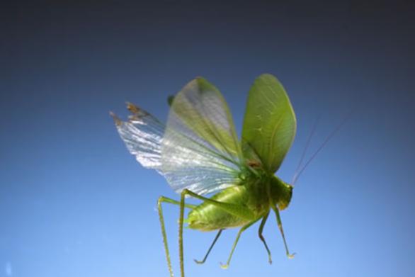 Εντυπωσιακό βίντεο δείχνει πως πετούν 11 είδη εντόμων
