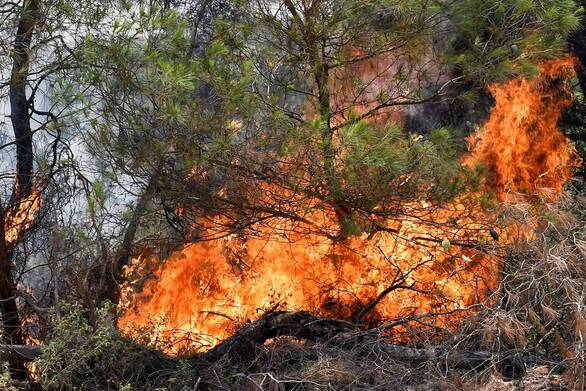 Πολύ υψηλός κίνδυνος πυρκαγιάς την Τρίτη σε Αχαΐα και Ηλεία
