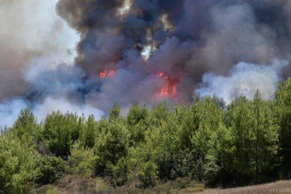 Ηλεία - Φωτιά στην περιοχή Κορυφή του Πύργου (φωτό)