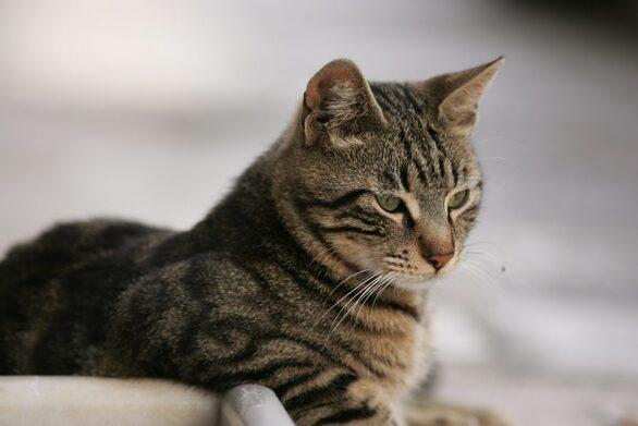 Πάτρα: Άνδρας πιάστηκε με αίματα και σουγιά στα χέρια - Είχε σφάξει μια γάτα
