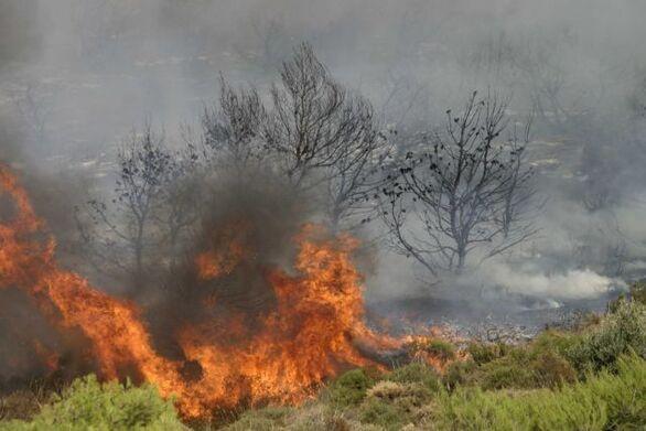 Αχαΐα: Φωτιά ξέσπασε στο Βασιλικό