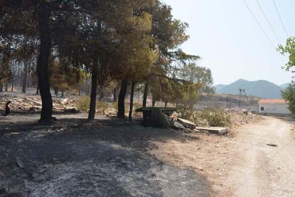 Καρυά Πάτρας, ώρα μηδέν - Η φωτιά πήρε μαζί της την αύρα και άφησε τις στάχτες (φωτο)