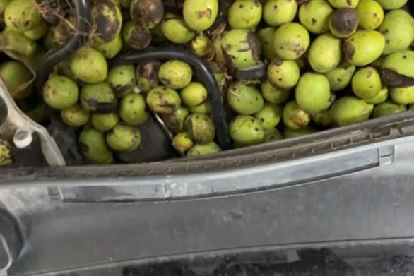 Σκίουρος βρήκε μια ασυνήθιστη κρυψώνα για να αποθηκεύσει τα καρύδια του (video)