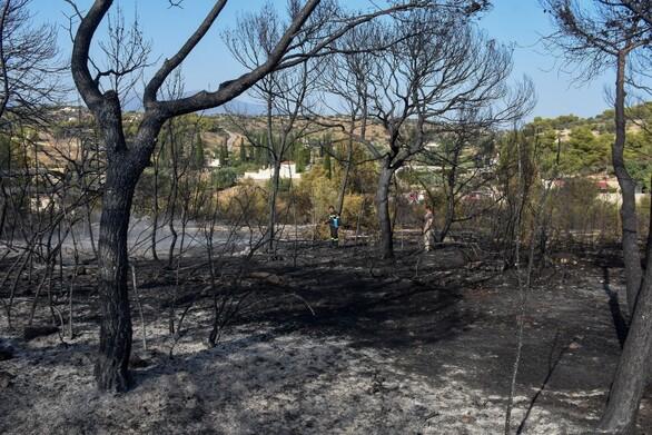 Δυτική Ελλάδα: Τι προβλέπεται για τις αποζημιώσεις των πληγέντων από τις πυρκαγιές
