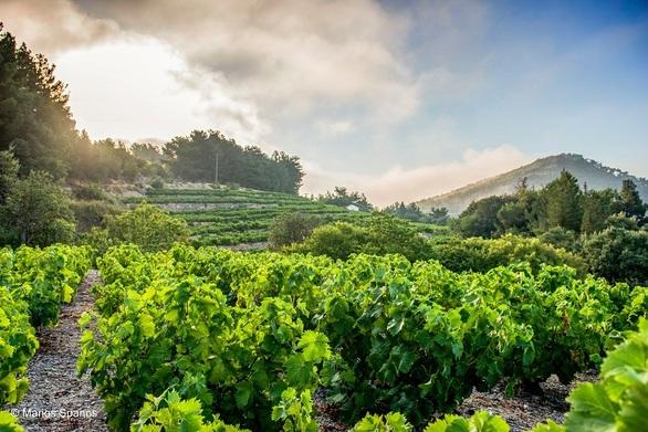 Γαλλία: Στην τρίτη θέση παγκοσμίως ως παραγωγός κρασιού το 2021