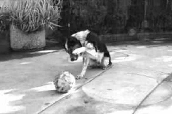 Το πιο έξυπνο σκυλί στον κόσμο (video)
