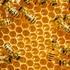 Ηλικιωμένος πέθανε από τσιμπήματα μελισσών που απελευθερώθηκαν μετά από τροχαίο